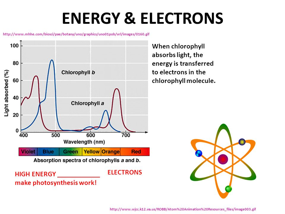 ENERGY & ELECTRONS When chlorophyll absorbs light, the