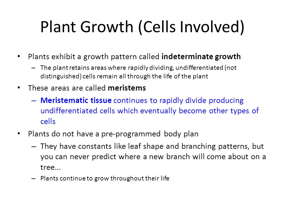 Plant Growth (Cells Involved)
