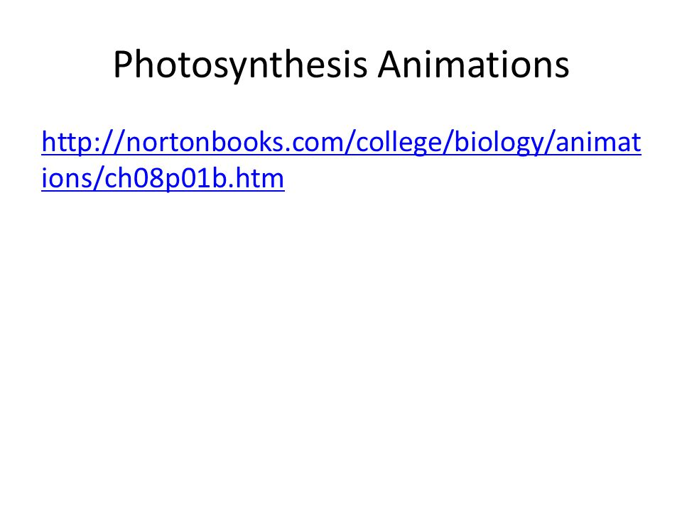 Photosynthesis Animations