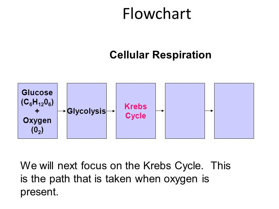 Flowchart Cellular Respiration