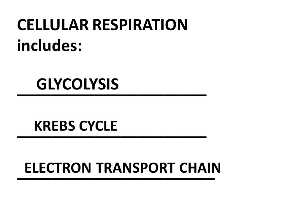 CELLULAR RESPIRATION includes: