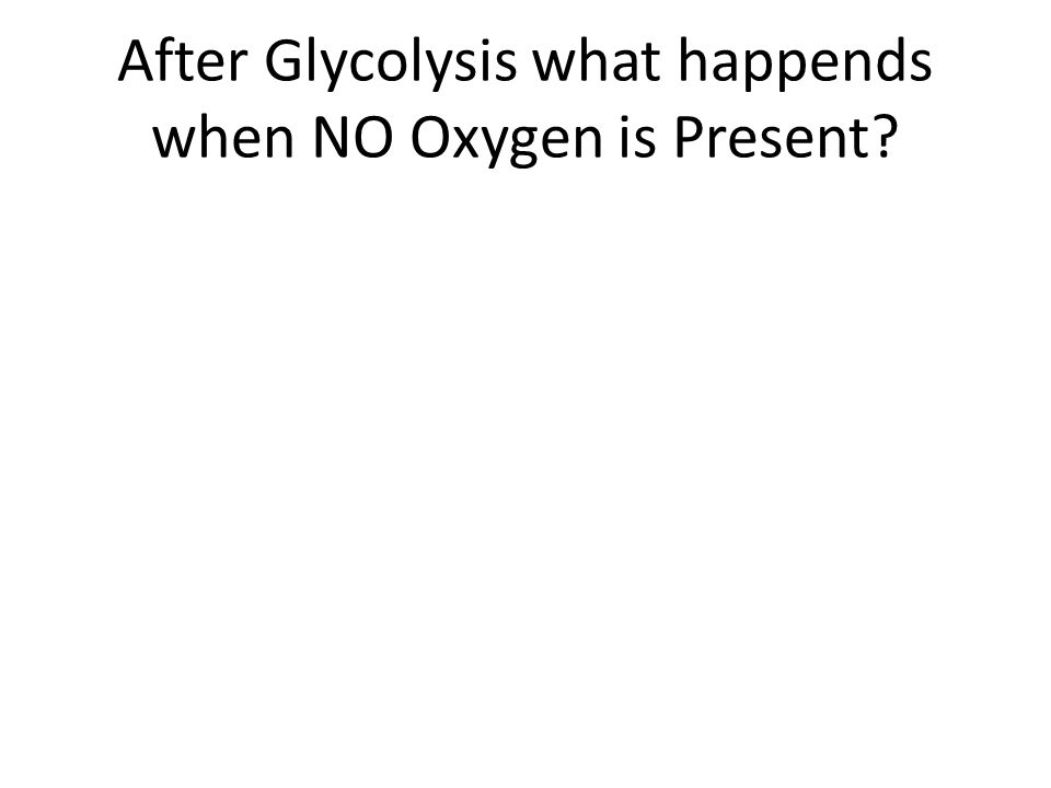 After Glycolysis what happends when NO Oxygen is Present