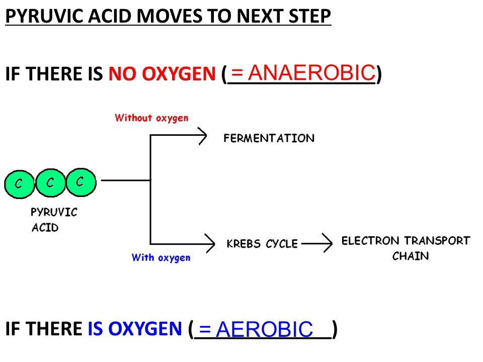 PYRUVIC ACID MOVES TO NEXT STEP