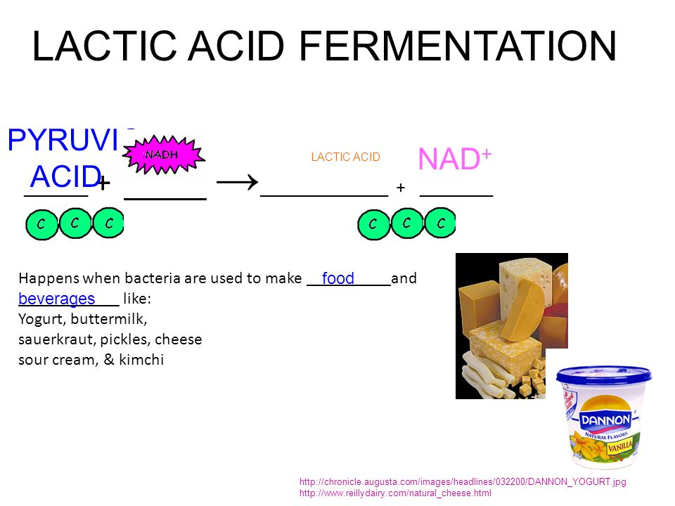 lactic acid bacteria in fermented food Fermented foods are foods that have been through a process of lactofermentation in which natural bacteria feed on the sugar and starch in the food creating lactic acid this process preserves the food, and creates beneficial enzymes, b-vitamins, omega-3 fatty acids, and various strains of probiotics.