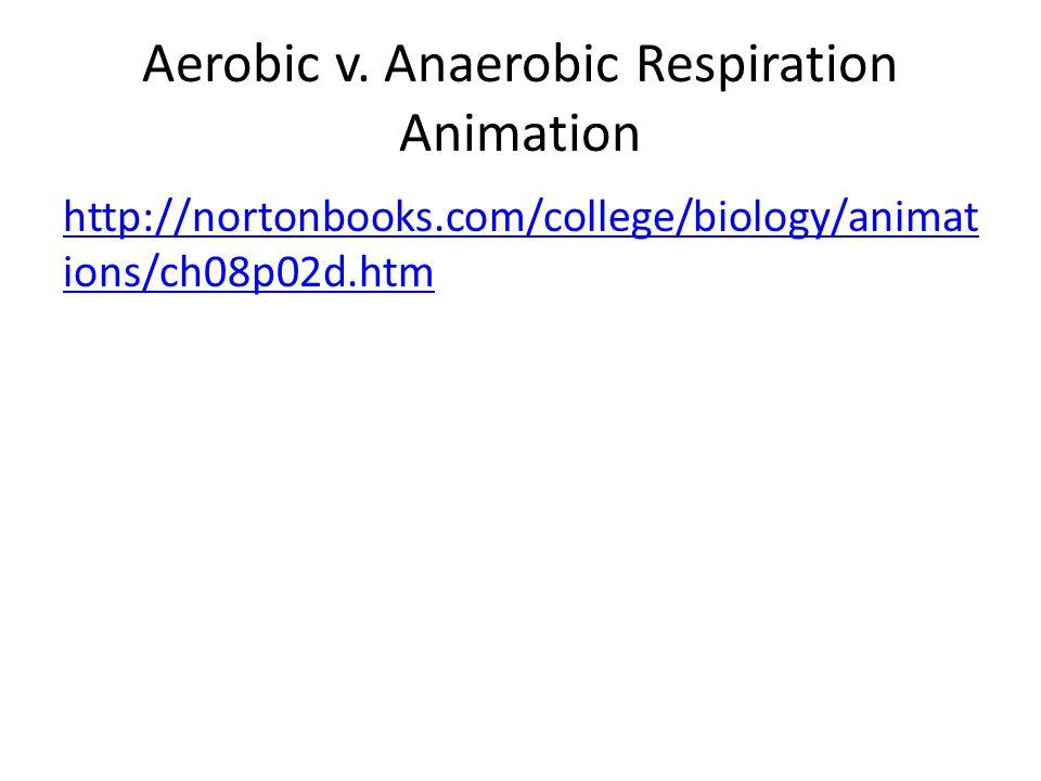 Aerobic v. Anaerobic Respiration Animation