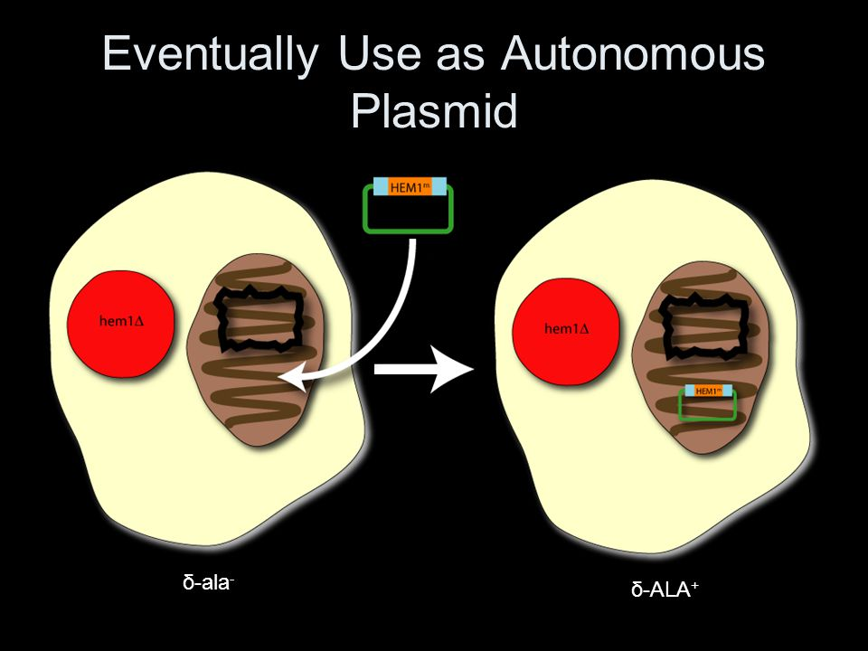 Eventually Use as Autonomous Plasmid