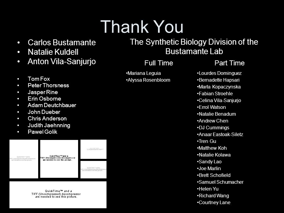 The Synthetic Biology Division of the Bustamante Lab