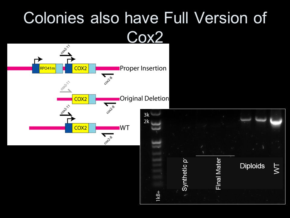 Colonies also have Full Version of Cox2
