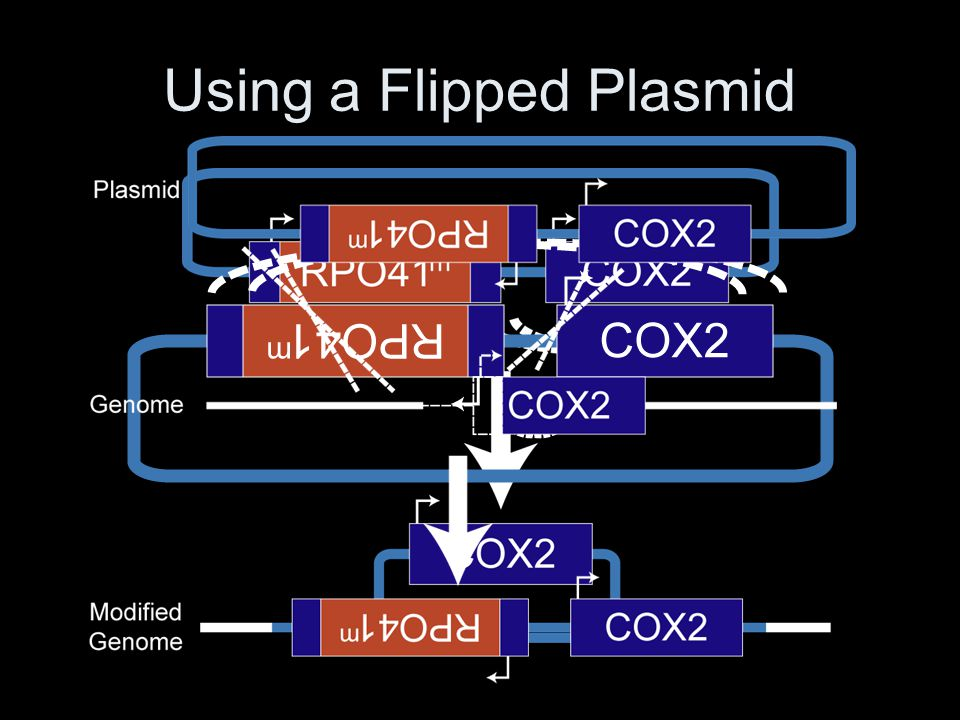 Using a Flipped Plasmid