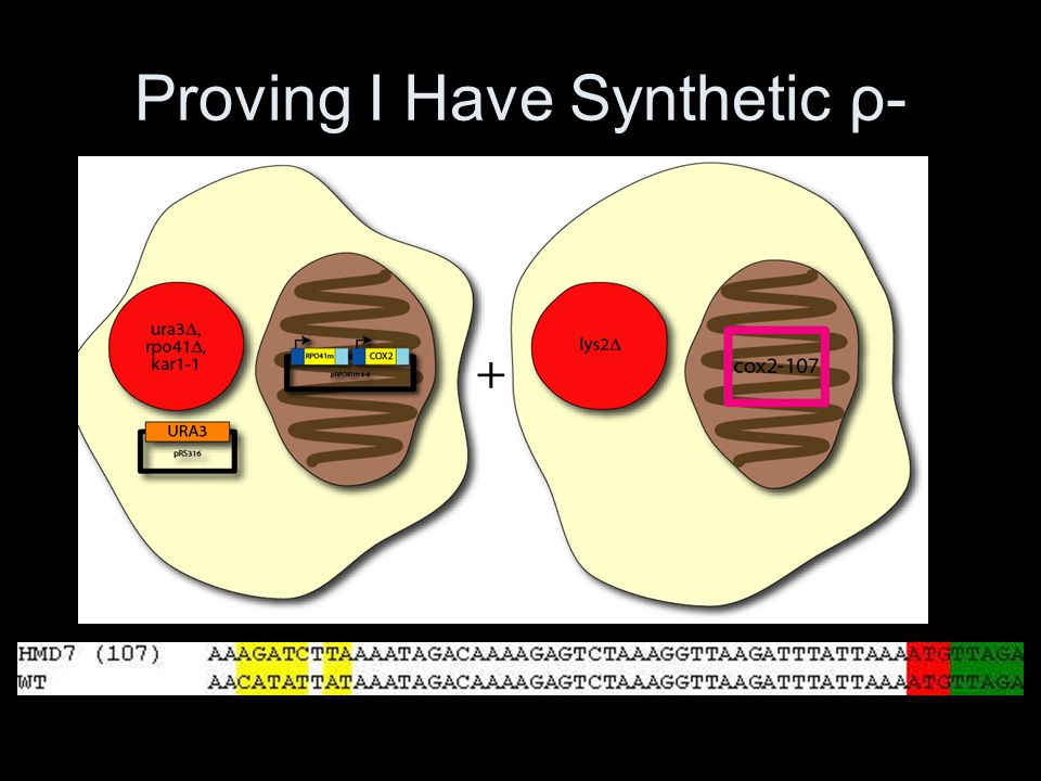 Proving I Have Synthetic ρ-