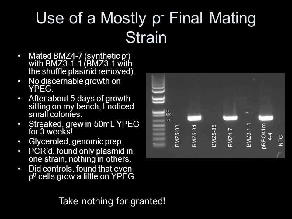 Use of a Mostly ρ- Final Mating Strain