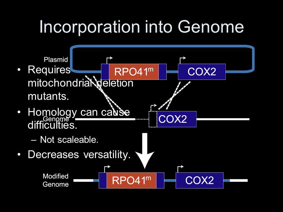 Incorporation into Genome