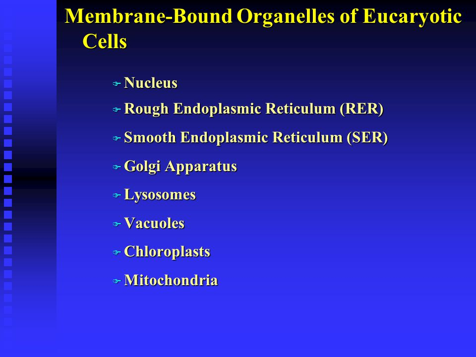 Membrane-Bound Organelles of Eucaryotic Cells