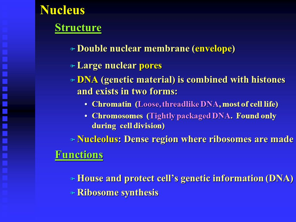 Nucleus Structure Functions Double nuclear membrane (envelope)