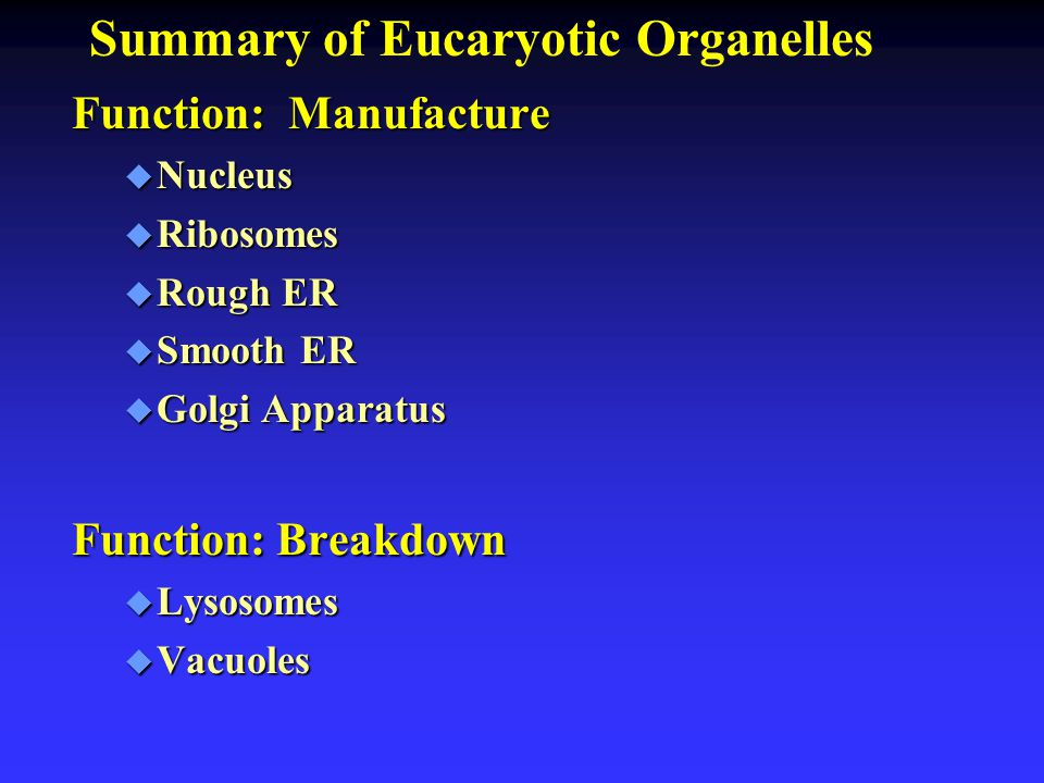 Summary of Eucaryotic Organelles