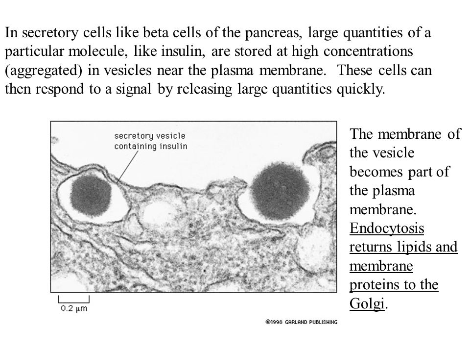 In secretory cells like beta cells of the pancreas, large quantities of a particular molecule, like insulin, are stored at high concentrations (aggregated) in vesicles near the plasma membrane. These cells can then respond to a signal by releasing large quantities quickly.