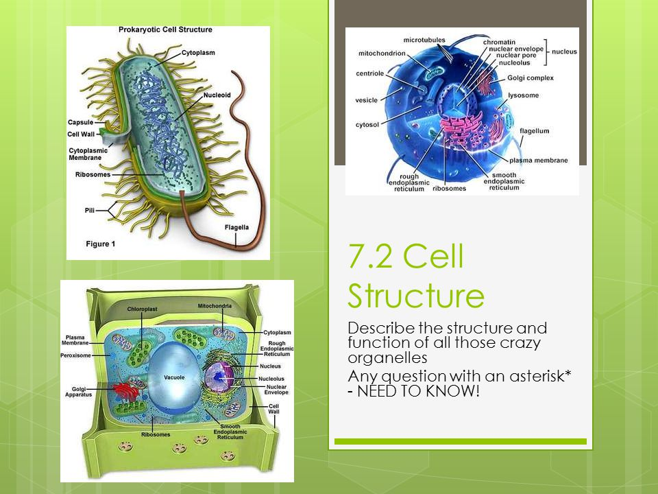 7.2 Cell Structure Describe the structure and function of all those crazy organelles.