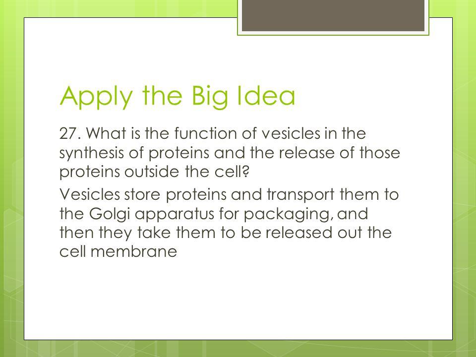 Apply the Big Idea