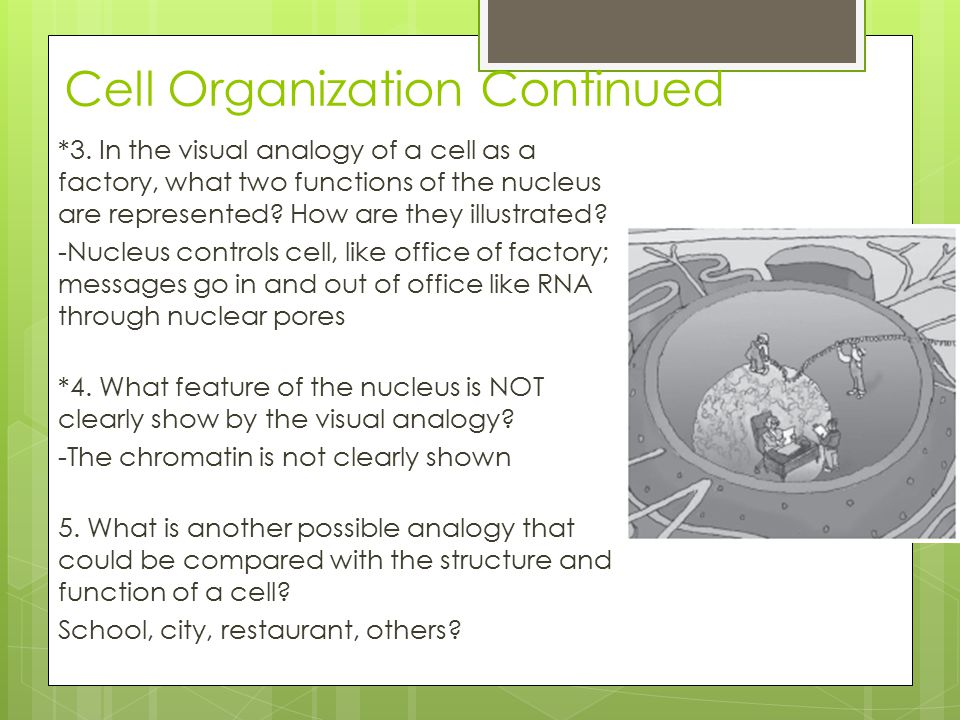 Cell Organization Continued