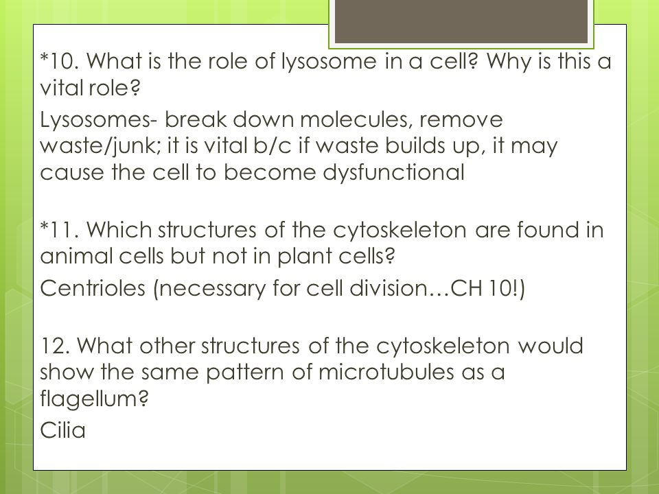 10. What is the role of lysosome in a cell. Why is this a vital role