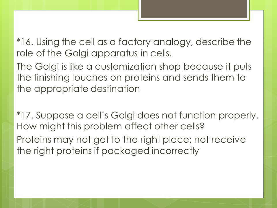 *16. Using the cell as a factory analogy, describe the role of the Golgi apparatus in cells.