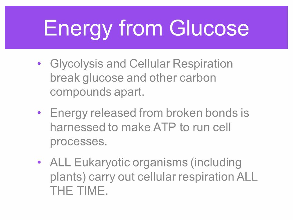 Energy from Glucose Glycolysis and Cellular Respiration break glucose and other carbon compounds apart.