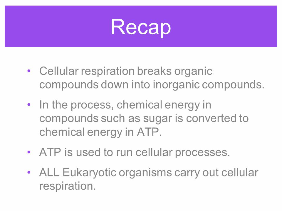 Recap Cellular respiration breaks organic compounds down into inorganic compounds.