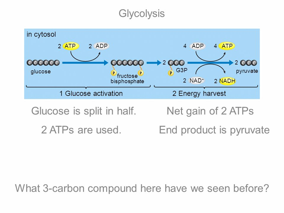 Glucose is split in half. Net gain of 2 ATPs