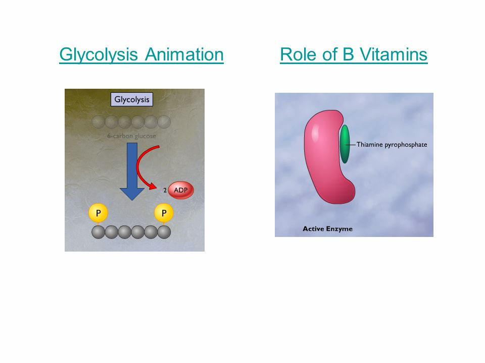 Glycolysis Animation Role of B Vitamins