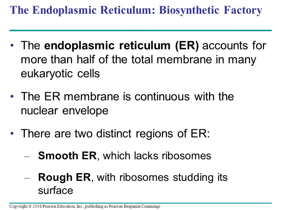 The Endoplasmic Reticulum: Biosynthetic Factory