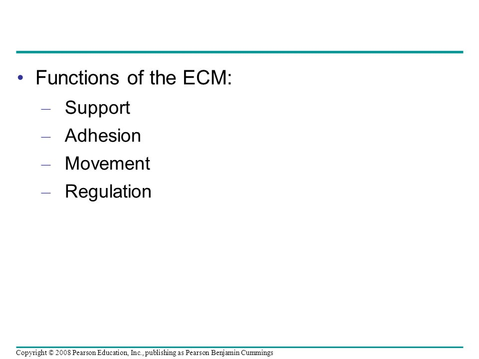Functions of the ECM: Support Adhesion Movement Regulation