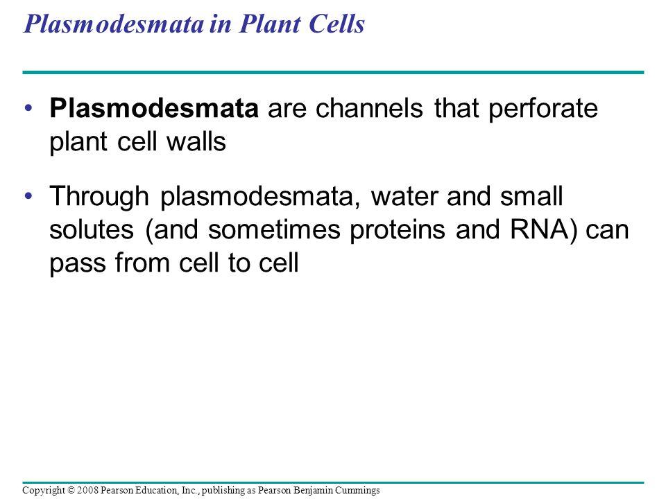 Plasmodesmata in Plant Cells
