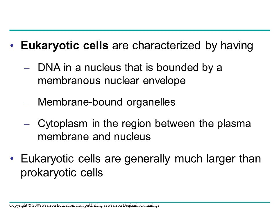 Eukaryotic cells are characterized by having