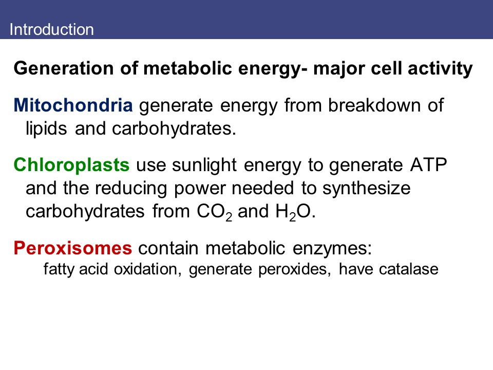 Generation of metabolic energy- major cell activity
