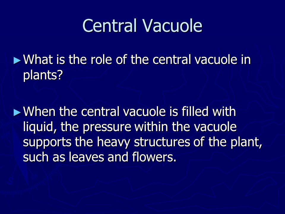 Central Vacuole What is the role of the central vacuole in plants