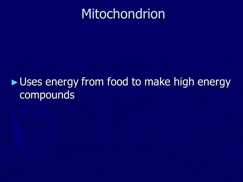 Mitochondrion Uses energy from food to make high energy compounds
