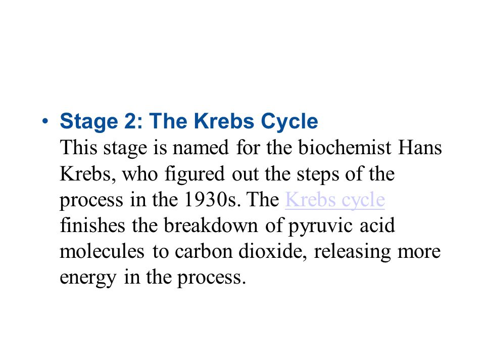 Stage 2: The Krebs Cycle This stage is named for the biochemist Hans Krebs, who figured out the steps of the process in the 1930s.