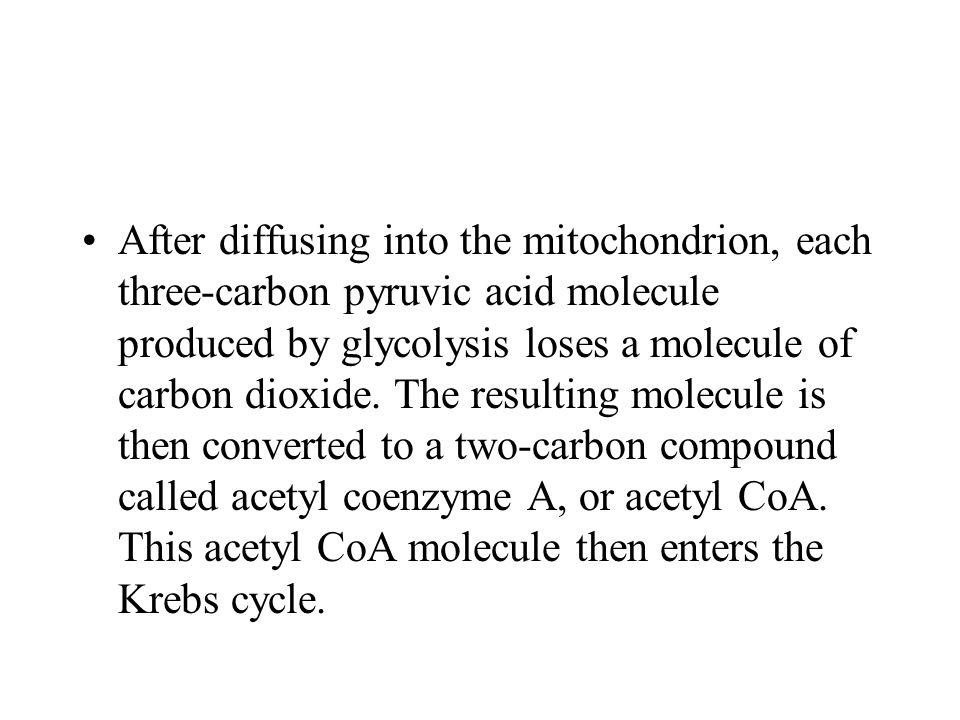 After diffusing into the mitochondrion, each three-carbon pyruvic acid molecule produced by glycolysis loses a molecule of carbon dioxide.