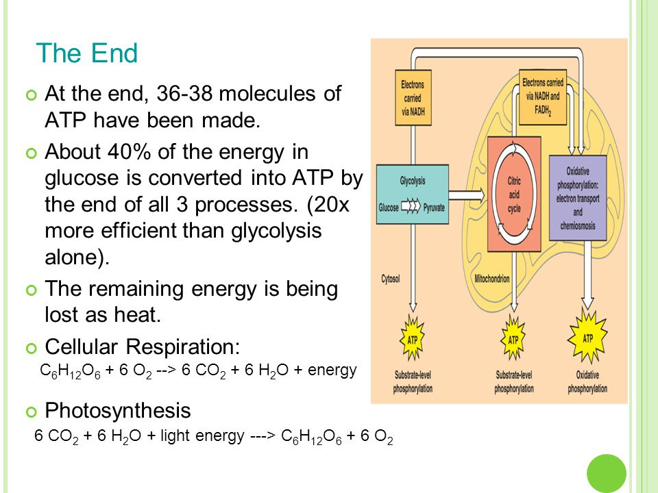 The End At the end, 36-38 molecules of ATP have been made.