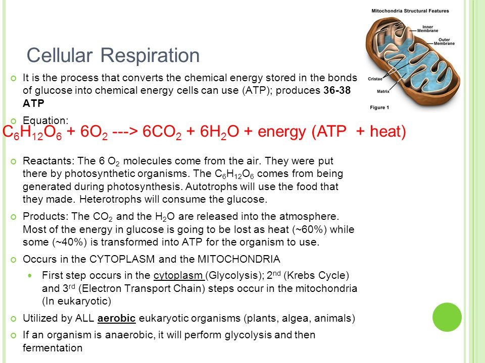 Cellular Energy Photosynthesis & Respiration - ppt download