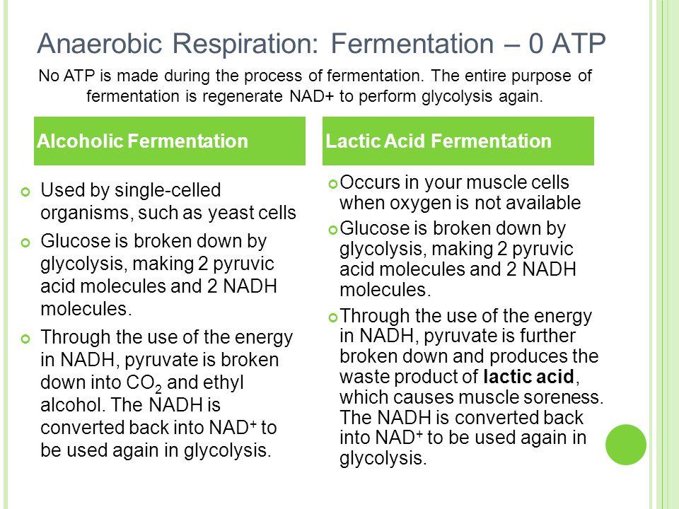 Anaerobic Respiration: Fermentation – 0 ATP
