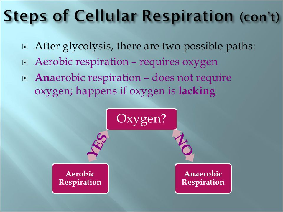 Steps of Cellular Respiration (con't)
