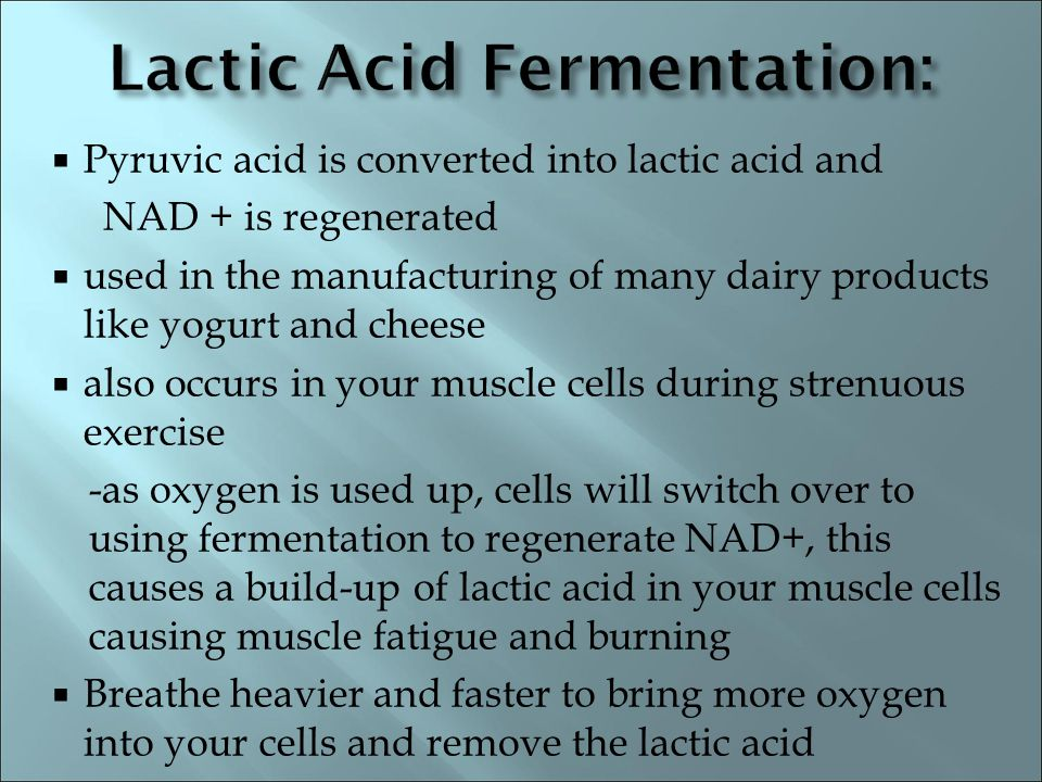 Lactic Acid Fermentation: