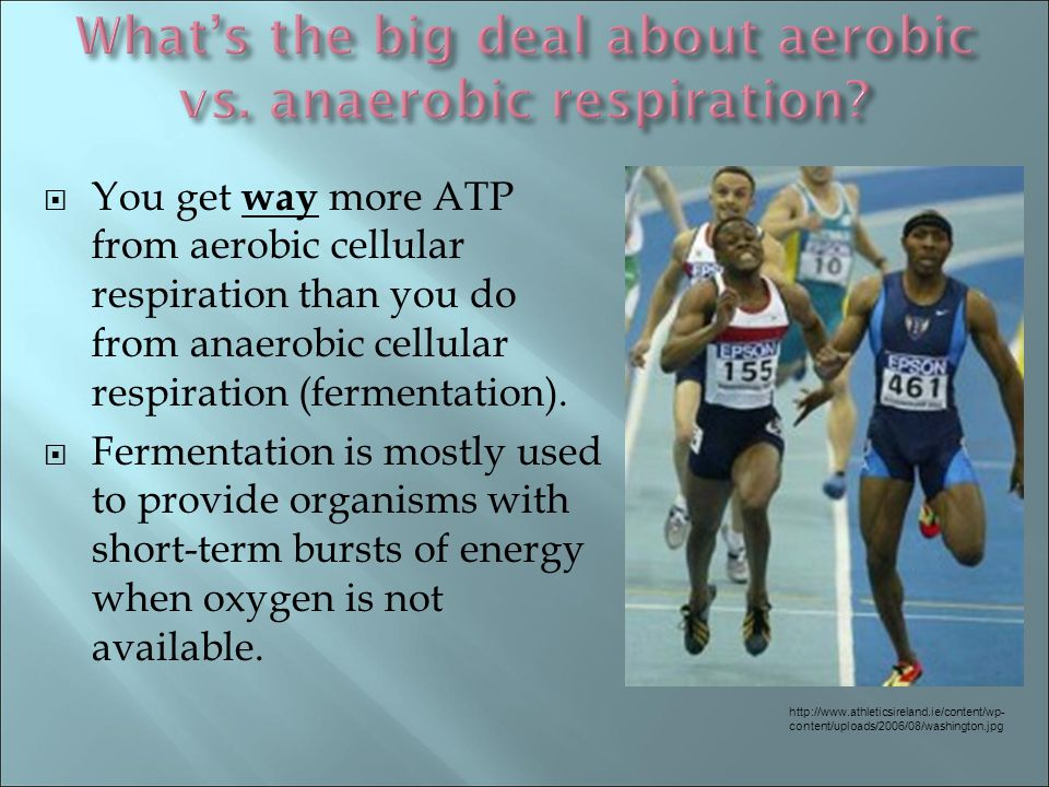 What's the big deal about aerobic vs. anaerobic respiration