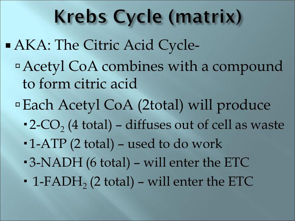 Krebs Cycle (matrix) AKA: The Citric Acid Cycle-