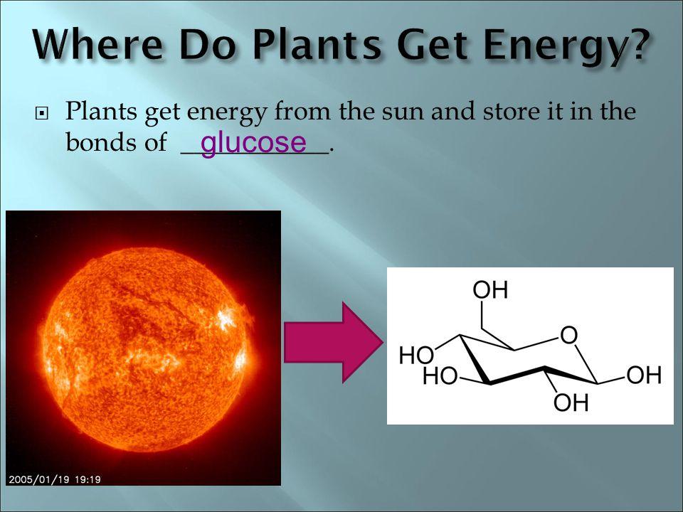 Where Do Plants Get Energy