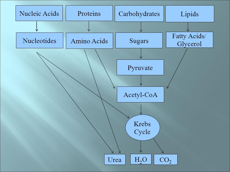 Nucleic Acids Proteins. Carbohydrates. Lipids. Nucleotides. Amino Acids. Sugars. Fatty Acids/