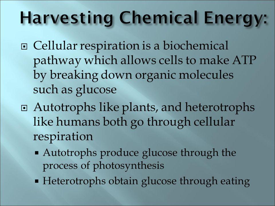 Harvesting Chemical Energy: