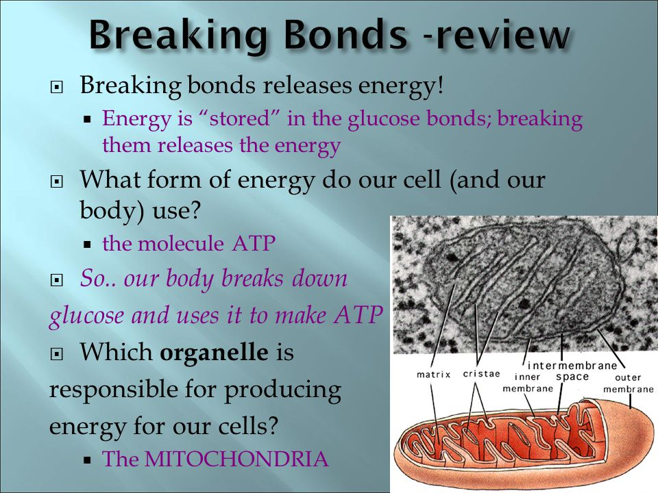 Using glucose to make energy (ATP) - ppt video online download