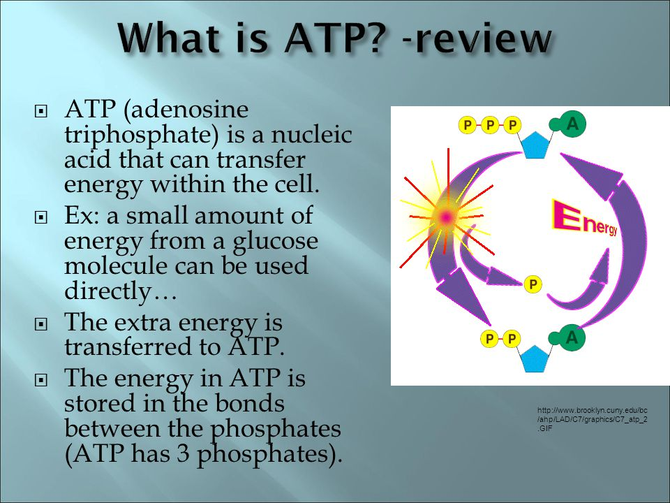 What is ATP -review ATP (adenosine triphosphate) is a nucleic acid that can transfer energy within the cell.
